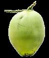 coconut_100